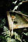 园林种植0133,园林种植,园林,自来水 泉水 山泉 滴落 清泉