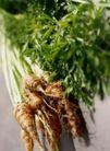 园林种植0135,园林种植,园林,丰收的蔬菜