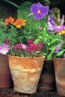 园林种植0149,园林种植,园林,盆景   兰花   鲜花