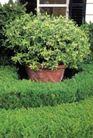 园林种植0154,园林种植,园林,小草 种草 种花