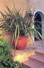 园林种植0156,园林种植,园林,种植 拱门 花草