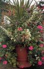 园林种植0157,园林种植,园林,花丛 小花 新鲜