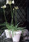 园林种植0161,园林种植,园林,石雕  狮子头  韭菜花