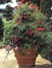 园林种植0164,园林种植,园林,苍松 色彩鲜艳  光彩夺目