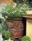 园林种植0165,园林种植,园林,雕像 焦烂 墙壁