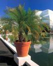 园林种植0166,园林种植,园林,睡莲 玻璃  白天