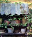 园林种植0175,园林种植,园林,花盆架 爬藤植物 大小花盆