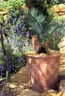 园林种植0176,园林种植,园林,紫花 格子花盆 铁树