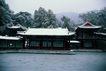 名院0127,名院,园林,雪后 苍茫 冷清 雪松 银色世界