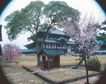 名院0174,名院,园林,绿瓦庙 桃花点缀 干净庭院