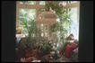 餐厅0116,餐厅,装饰,沙发 植物 鸟