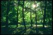 欧洲风情0159,欧洲风情,世界风光,森林 阳光 影子