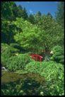 欧洲风情0183,欧洲风情,世界风光,绿色  树木 翠色欲滴