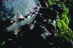 日本风情0064,日本风情,世界风光,溪水 流动 洗刷