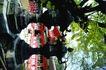 日本风情0073,日本风情,世界风光,特色 园艺 雕琢