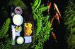 日本风情0094,日本风情,世界风光,鱼群 海洋 食物