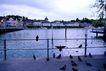 瑞士风情0010,瑞士风情,世界风光,水鸟 黑色 停靠 栏杆 湖边