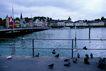 瑞士风情0016,瑞士风情,世界风光,栏杆 水鸟 停驻 岸边 寻食