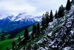 瑞士风情0019,瑞士风情,世界风光,山坡 树林 松树 远处 雪山