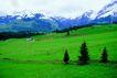 瑞士风情0021,瑞士风情,世界风光,雪山 草地 绿色