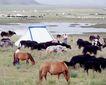 世界风情0068,世界风情,世界风光,蒙古 帐蓬 牧马
