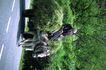 苏格兰风情0077,苏格兰风情,世界风光,老妇 骑驴 代步