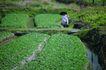 亚洲旅游0065,亚洲旅游,世界风光,茶园 忙碌 农民