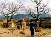 中国民间风情0162,中国民间风情,世界风光,水牛 草堆  茅屋
