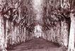 中国民间风情0175,中国民间风情,世界风光,白桦林 干枯枝桠 远方小楼
