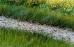 中国民间风情0179,中国民间风情,世界风光,小道 石子路 茂密青草