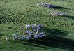 中国民间风情0182,中国民间风情,世界风光,羊群 草原 内蒙古