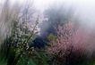 中国民间风情0184,中国民间风情,世界风光,绿树  青山 摇曳多姿