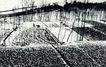 中国民间风情0187,中国民间风情,世界风光,白雪  田野 一人散步