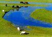 中国民间风情0194,中国民间风情,世界风光,草原放牧 马儿吃草 小湖