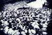 中国民间风情0203,中国民间风情,世界风光,绵羊 成群 牧羊人