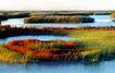 中国民间风情0205,中国民间风情,世界风光,水草 水滩 草地