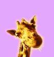 抽象生活0050,抽象生活,抽象,长颈鹿 头部 黄须