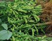 新鲜蔬菜0049,新鲜蔬菜,农业,