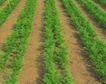 新鲜蔬菜0056,新鲜蔬菜,农业,