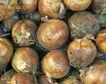 新鲜蔬菜0058,新鲜蔬菜,农业,
