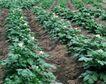 新鲜蔬菜0062,新鲜蔬菜,农业,土沟 菜地 种植