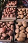新鲜蔬菜0081,新鲜蔬菜,农业,果实 收获 新鲜