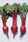新鲜蔬菜0088,新鲜蔬菜,农业,蔬菜 农活 生活
