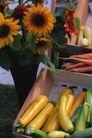 新鲜蔬菜0090,新鲜蔬菜,农业,蔬菜 黄瓜 红萝卜