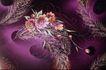 中华刺绣0020,中华刺绣,艺术,花朵 麦穗 插入