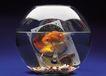 储存世界0159,储存世界,科技,鱼缸 金鱼