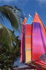 健康休闲0177,健康休闲,运动,棕榈叶 多彩帆板船 靠海
