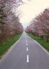 道路百科0129,道路百科,工业,春季 花开 果园 双向车道 赏花