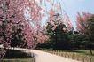 法国巴黎0204,法国巴黎,世界风光,公园 幽静 红花