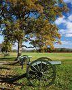 世界旅游0245,世界旅游,世界风光,大树 车轮 炮筒